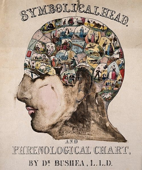Henri Bushea (1845년경). 한때 두개골의 국소적 형태를 통해 개인의 능력과 성격, 운명을 짐작할 수 있다는 골상학이 크게 유행했다. 현대 사회의 좌뇌 우뇌 신화도 어떤 의미에서는 변형된 골상학에 가까운지 모른다. - wikimedia(cc) 제공