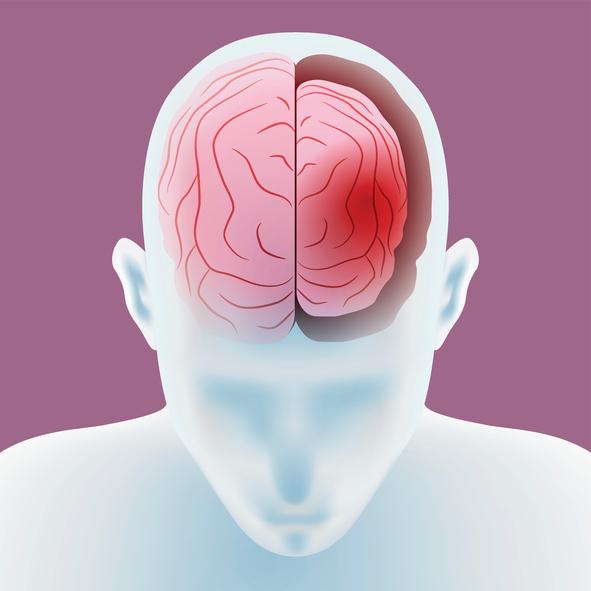 19세기 뇌의 국재적 기능에 대한 지식이 밝혀지면서, 이른바 골상학이 크게 인기를 끌었다. 뇌의 각 부분의 기능과 성격, 재능, 심지어 운명까지도 두개골의 모양을 통해 짐작할 수 있다는 주장이다. 현대 사회의 좌뇌 우뇌 신화는 골상학적 믿음의 변형인지도 모른다. - GIB 제공