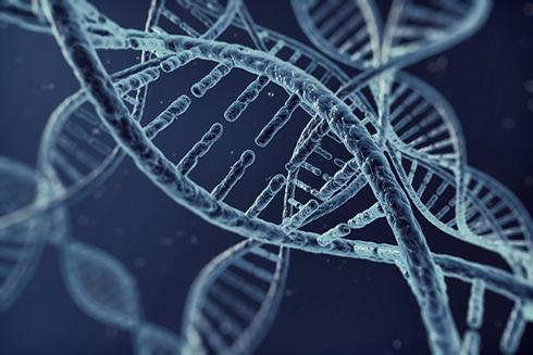 자폐증 일으키는 유전자 '삼돌이' 확인