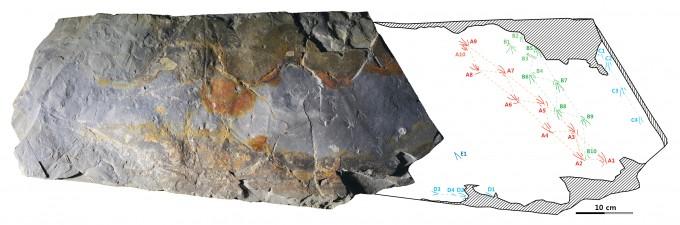 이항재 한국지질자원연구원팀이 발견해 연구한 1억 1000만 년 전 도마뱀 발자국 화석. - 사진제공 한국지질자원연구원