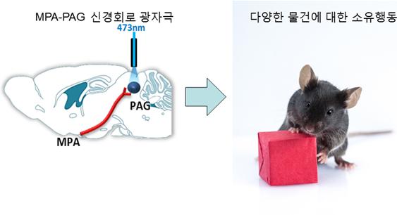 KAIST, 소유욕 만드는 뇌 신경회로 발견
