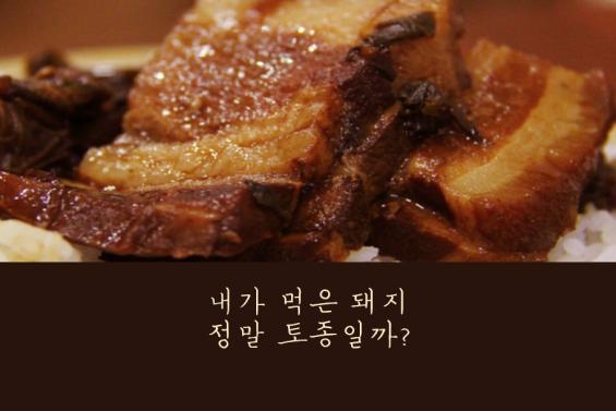 [카드뉴스] 내가 먹은 돼지, 정말 토종일까?