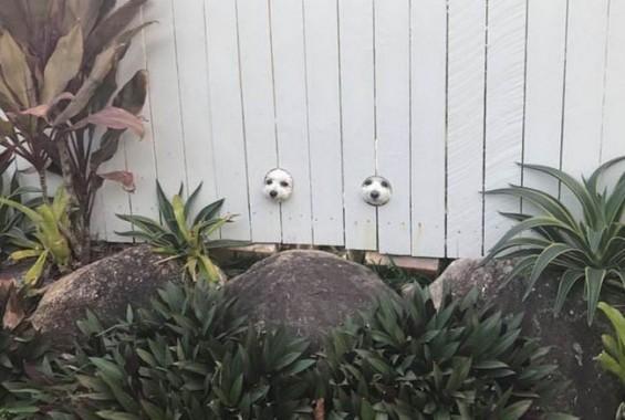세상 구경하는 강아지들