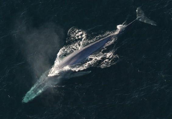 지구 사상 최대 동물, 고래는 왜 클까?