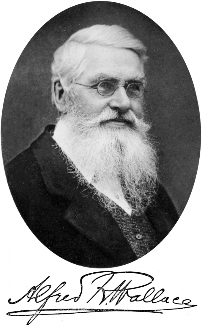 1만년의 알프레드 월리스. 월리스는 가난한 집안에서 태어나 정규 교육을 제대로 받지 못했지만, 자연에 대한 순수한 열정만으로 오지를 탐험했고, 자연선택에 관한 훌륭한 이론을 고안해냈다.-wikimeda(cc) 제공