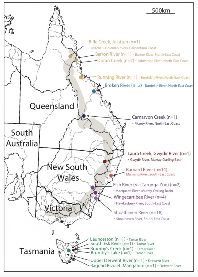 동부 호주에서 지역별로 총 57마리의 오리너구리 개체수를 모아 유전자 분석을 실시했다. 그 결과 약 100만년전 미지의 조상동물에서 타스마니아제도, 북부 퀸즐랜드 그리고 뉴사우스웨일주와 중앙 퀸즐랜드등 세 지역에서 고유 오리너구리종이 분화하기 시작한 것을 알아냈다.-Oxford University 제공