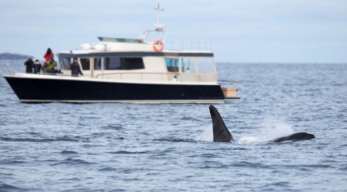 고래를 포획한 뒤 사고사로 위장판매 하는 경우가 많지만 소비자가 불법 유통 여부를 확인할 수 없다 -사진 GIB 제공