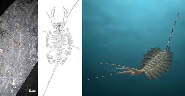 원시절지동물 케리그마켈라의 형태분석과 헤엄치는 모습 복원도. 극지연구소 제공.