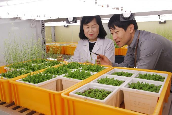 서경희 IBS 식물 노화수명 연구단 연구원과 이인철 선임 기술원. 오가희 기자 solea@donga.com