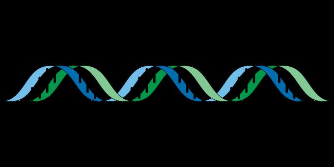 괜히 유전자가 이렇게 생긴 게 아니다. 출처 : CC BY OpenClipart-Vectors