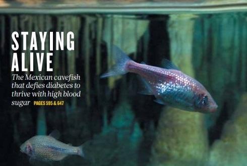 [표지로 읽는 과학] 물고기는 먹이가 부족한 동굴에서 어떻게 살아남았을까