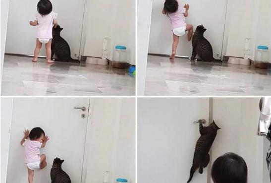 아기를 가출 시킨 고양이