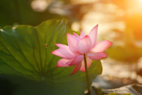 [짬짜면 과학 교실] 칠백 년을 기다린 연꽃