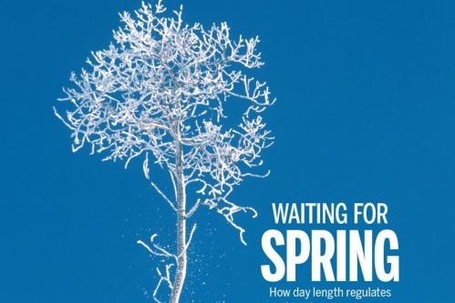 [표지로 읽는 과학] 나무는 어떻게 겨울잠을 잘까?