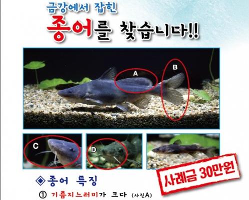 금강에 사는 민물고기 '종어'에 사례금 30만원 걸린 이유?
