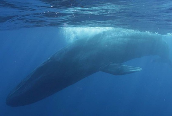 [팔라우 힐링레터] 지구에서 가장 크고, 그래서 경이로운 고래