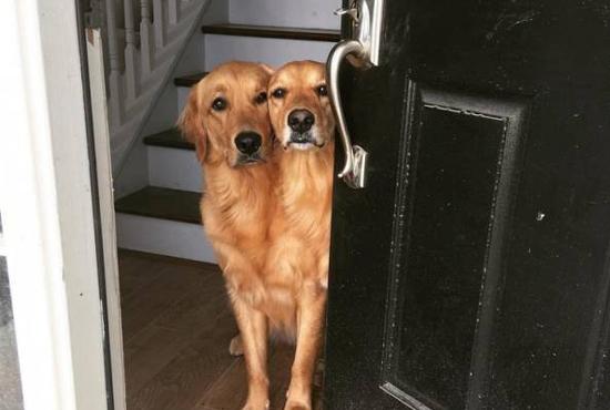 머리가 둘, 샴쌍둥이 개?