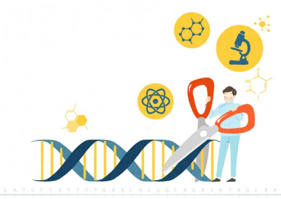 정확도 1만 배! 합성 물질로 성능 개선한 유전자가위 '크리스퍼'