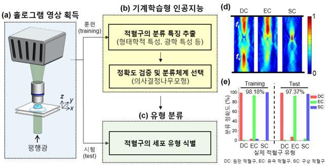 적혈구 형태를 확인하기 위해 개발된 기계학습 인공지능의 개요도. 오른쪽 그래프를 보면 정확도가 97%에 달하는 것을 확인할 수 있다. - 한국연구재단 제공
