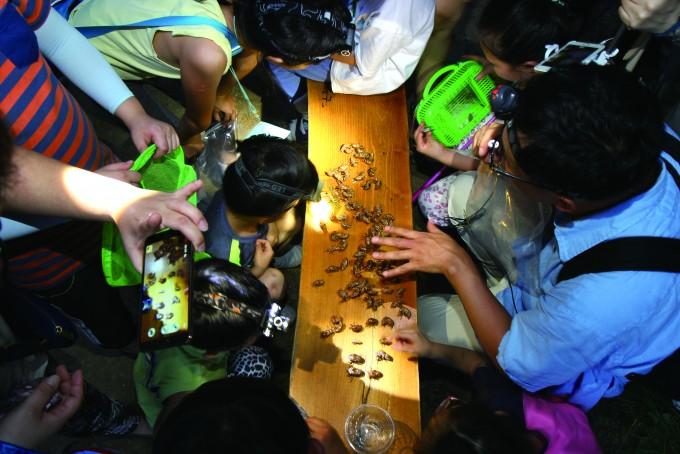 지구사랑탐사대 현장교육에서 대원들에게 매미 탈피각의 모양과 크기에 따라 종을 분류하는 방법을 알려 주고 있다.