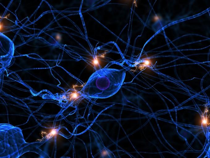 성인 뇌에서 뉴런이 만들어지는지 여부가 삶에 어떤 영향을 미칠까 - 사진 GIB 제공