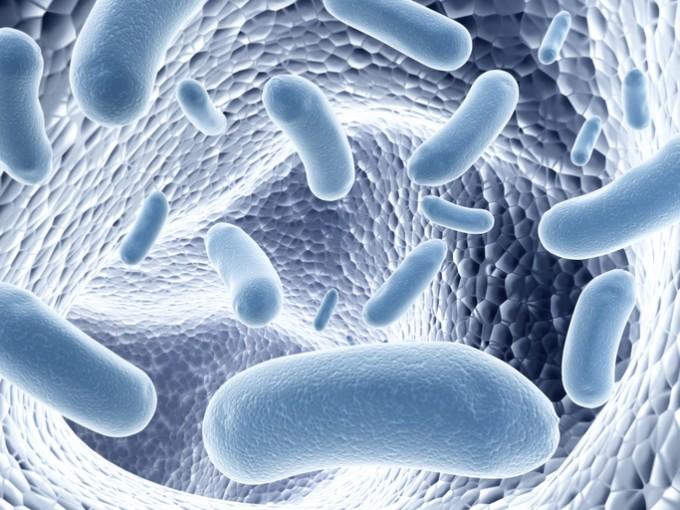 사람마다 면역력·약효 다른 이유는 '장내 미생물'