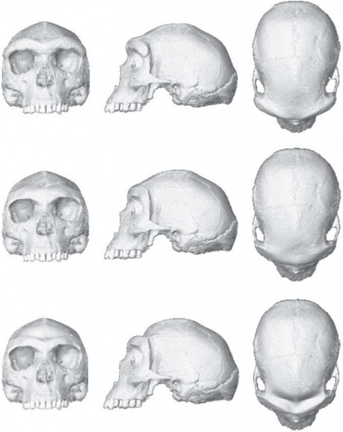 컴퓨터로 친척 인류 호모 하이델베르겐시스의 화석을 재현한 뒤, 눈 위 뼈의 두께를 변화시킨 시뮬레이션. - 사진 제공 네이처 생태진화