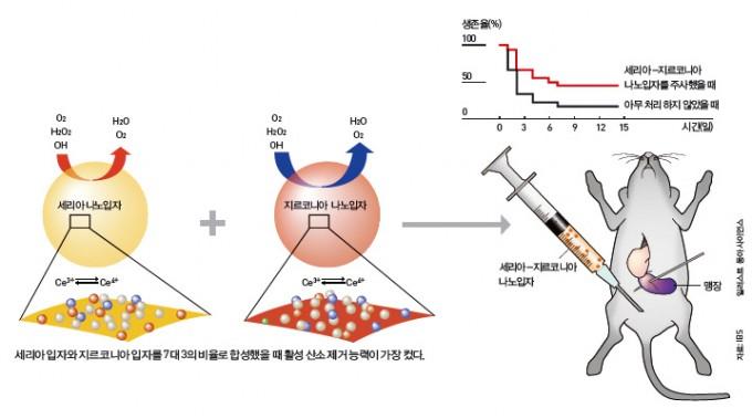 나노입자로 패혈증 치료 - IBS 나노입자연구단과 서울대병원 신경과 공동연구팀이 세리아-지르코니아(CeZrO2) 나노입자를 합성해 패혈증을 치료하는 방법을 찾았다. 패혈증 원인인 활성산소를 없애는 세륨3가 이온(Ce3+)을 증가시키는 원리다. 쥐의 맹장을 터뜨려서 패혈증을 일으킨 결과, 아무 처리를 안 했을 때보다 세리아-지르코니아 나노입자를 넣었을 때 생존률이 2.5배나 높았다.  - IBS 제공