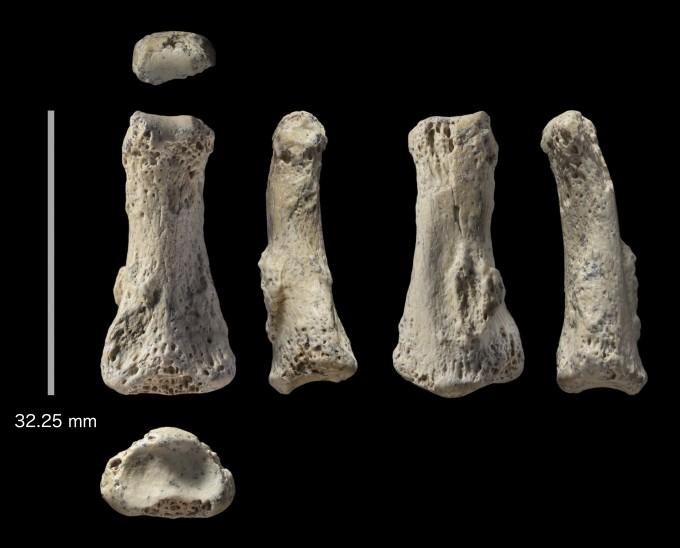 사우디아라비아 북서쪽 사막에서 발굴된 현생인류(호모사피엔스)의 손가락 뼈 화석이다. 독일 연구팀의 연대 측정 결과 이는 8만5000년 전 화석으로 밝혀졌다. 현생인류가 아프리카를 나와 유라시아로 퍼진 시점도 최소 이 시기로 앞당겨졌다. 기존에는 약 6만 년 전에 유라시아로 퍼졌다고 알려져 있었다. -사진 제공 이언 카트라이트
