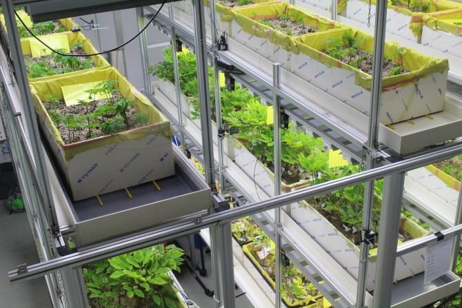 스마트팜 솔루션 융합연구단 내에 있는 식물공장 '스마트유팜(Smart U-FARM)'. <br>화장품 원료로 쓰기 위한 인삼 열매 재배법을 연구 중이다. - 이혜림 기자