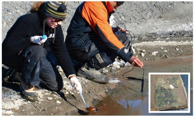 앤 융블루트 박사가 남극 맥머도 빙붕에서 시아노박테리아 표본을 수집하고 있다. 작은 사진은 1902년 12월, 스콧 원정대가 남극 맥머도 빙붕에서 수집한 시아노박테리아의 표본. - Tayler&Francis 제공