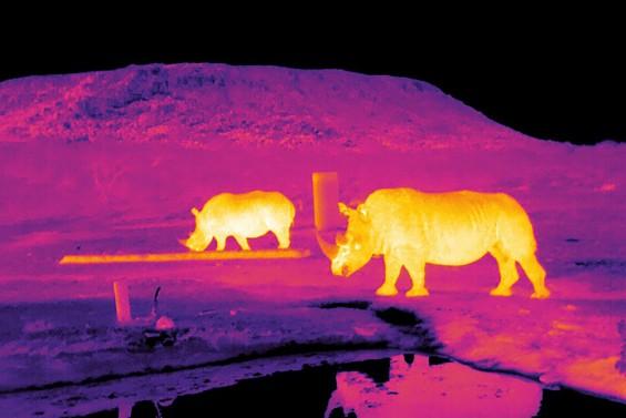 멸종위기종 보호 나선 천문학자들