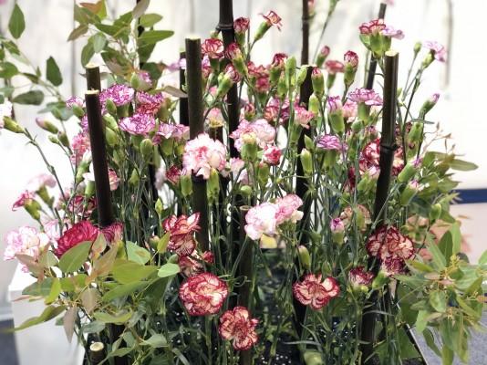 올드한 카네이션의 대반란...투톤, 파스텔톤, 화려한 겹꽃