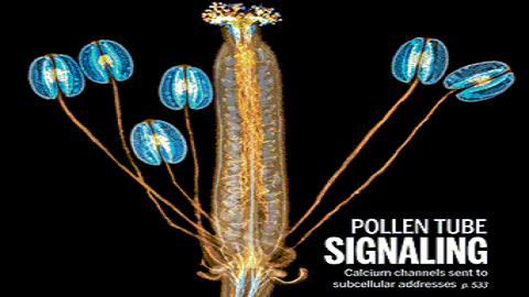 [표지로 읽는 과학] 꽃가루관 칼슘 농도가 식물의 신경전달반응을 결정한다