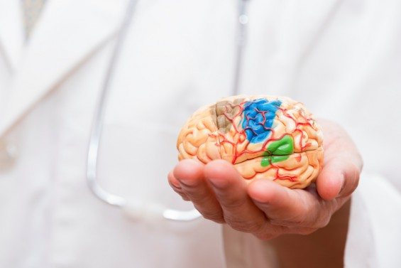 """""""2040년까지 치매 인구 20% 줄인다"""" 뇌과학 연구 청사진 나와"""
