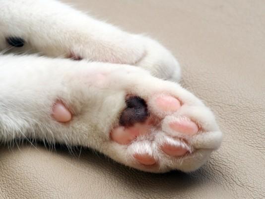 우리집 고양이의 숨은 비밀…고양이 연구들 ②