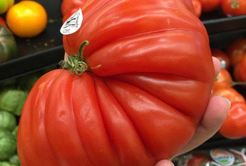 괴물 같은 토마토