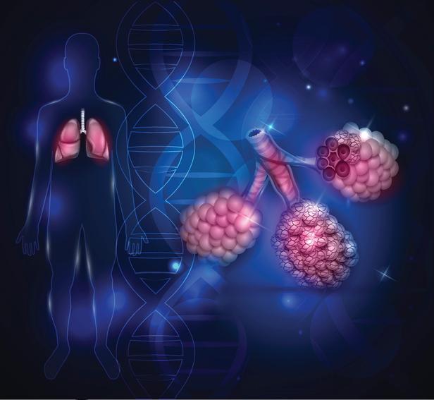 사람의 폐는 마치 포도처럼 여러 개의 폐포로 이뤄져 있다. 라돈이 폐로 들어가면 폐포에 붙어 내부피폭을 일으킨다. - GIB 제공