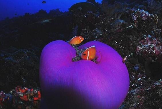 [팔라우 힐링레터] 절대 만지지 마시오! 항아리 말미잘 (Sea Anemone)