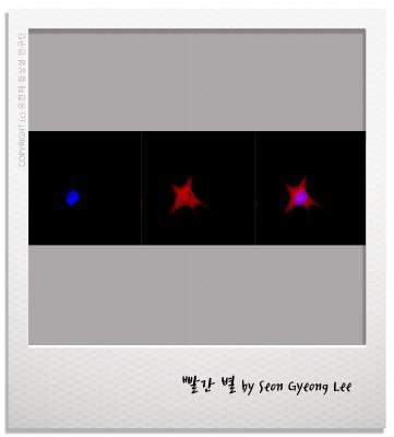 [과학사진관] 반짝반짝 작은 별 아름답게 비추네