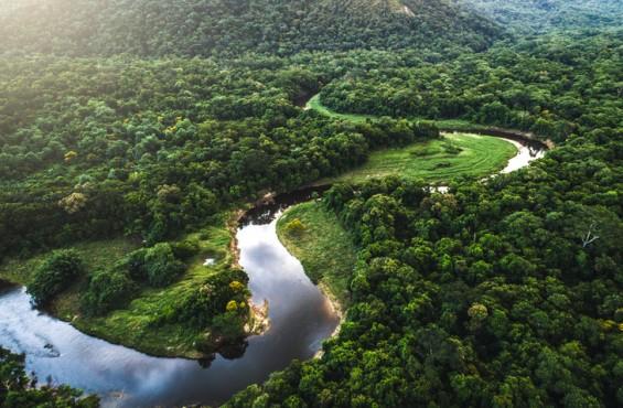 키 큰 나무들이 가뭄에서 아마존 지킨다