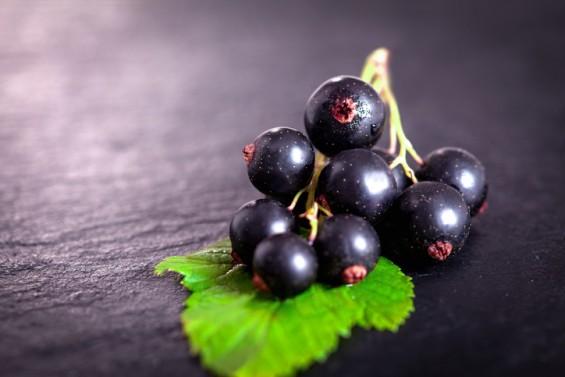 검은 베리 열매로 안전한 염색약 개발