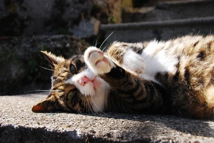 봄, 여름철에는 활동량과 에너지 소비량이 줄어들기 때문에 고양이의 식욕을 주의깊게 관찰할 필요가 있다 - 사진 pixabay 제공