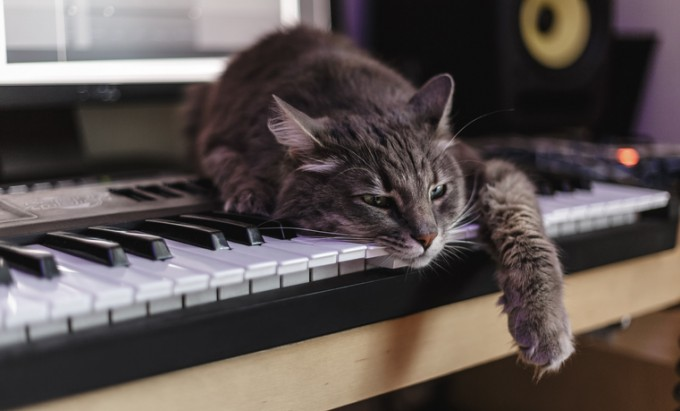 실험결과 고양이는 G 선상의 아리아보다 그르릉거리는 패턴을 적용한 고양이 음악을 선호했다. - 사진 pixabay 제공