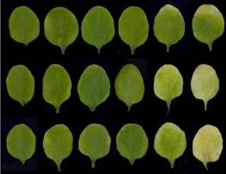 식물은 이렇게 늙는다...노화 속도 조절 메커니즘 발견