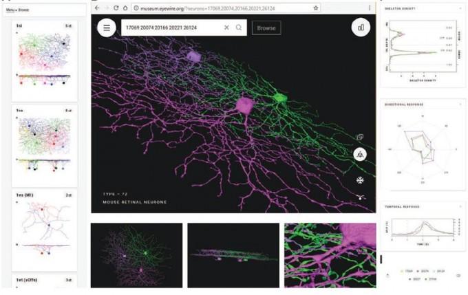 연구팀은 이번에 밝힌 신경절세포 데이터를 일종의 가상 전시관 형태로 공개했다. 홈페이지(museum.eyewire.org)를 통해 누구나 확인할 수 있다. -사진 제공 한국뇌연구원