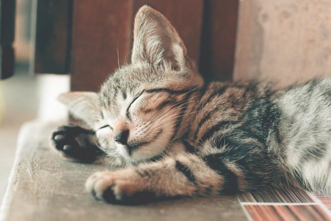 고양이는 깊은 수면상태에서도 귀와 수염이 소음을 바로 인지하고 대응한다. - 사진 pixabay 제공