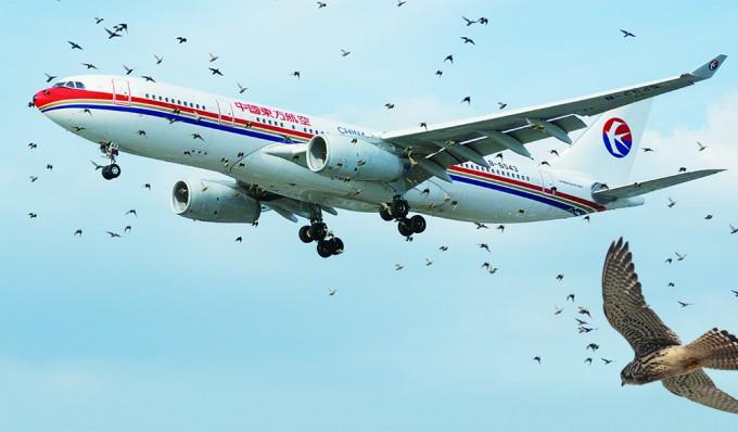 비행기의 이륙과 함께 날아오르는 새들. 이런 경우 엔진에 새가 빨려 들어갈 가능성이 높다. - NMOS332(W) 제공
