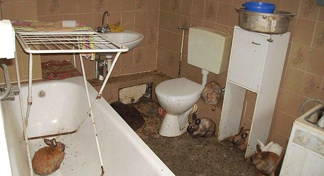 저장장애는 다양한 유형으로 나타난다. 사진은 '동물 저장장애(animal hoarding)'로 화장실이 토끼들로 엉망이 돼 있다. 유기견이나 길고양이가 불쌍하다며 거둬 키우는 사람은 마릿수가 어느 선을 넘을 경우 저장장애를 의심해 심리상담을 받을 필요가 있다. - 위키피디아 제공