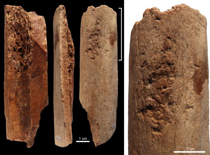 13만~11만 년 전 중국 내륙에 살던 인류가 만든 뼈도끼. 돌 등을 다듬은 흔적이 남아 있다. -사진제공 플로스원